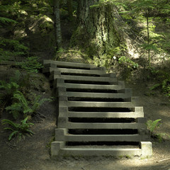 Stairs in the wood
