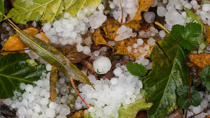 Hail in the garden