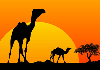 camel silhouette and african sunset