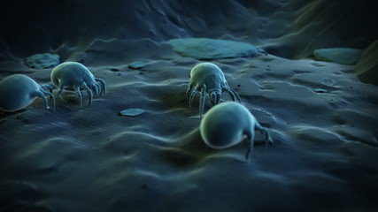Animation showing some dust mites