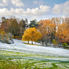 Park in Autumn. The first snow.