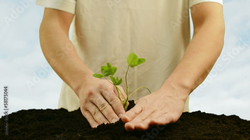 green plant in the ground and hands on a background of blue sky