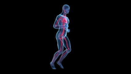 3d animated jogger - visible blood vessels