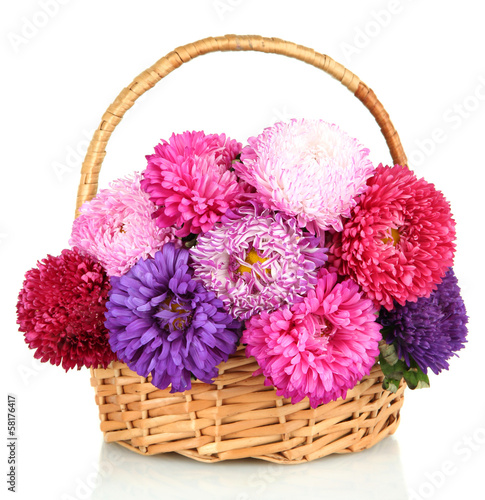 Bright aster flowers in basket, isolated on white