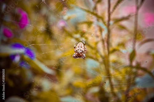 spider web on a bush