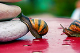 snail encouraged to climb by its congener poster