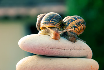 couple of snails on a pebbles mountain