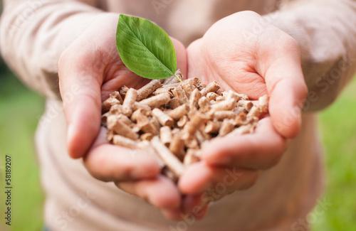 Wood pellets - 58189207