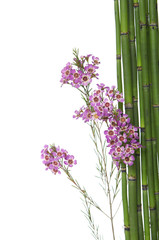 Branch pink orchid flowers and bamboo grove