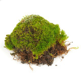 Clump of Green Moss Isolated on White Background