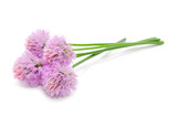 Chive Flowers Isolated on White Background