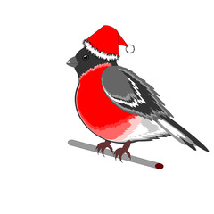 A Christmas bullfinch on a white background