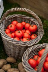 Körbe mit Tomaten