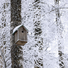 Birdhouse at winter