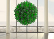 Green natural ball floating in front of windows