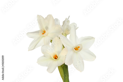 Staande foto Narcis Paperwhite daffodils