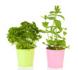 Fresh mint and parsley plant in pink pot