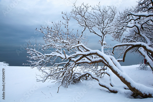 Norwegian winter fjord landscape with tree