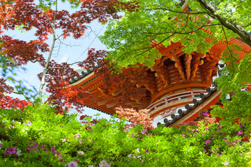 Pagoda Seen Through Japanese Maple Trees