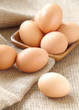 Chicken brown eggs