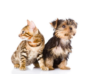 little kitten and puppy. isolated on white background