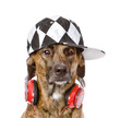 dog with headphones. isolated on white background