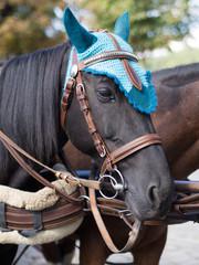Pferdeportrait - Pferd mit Kopfschmuck