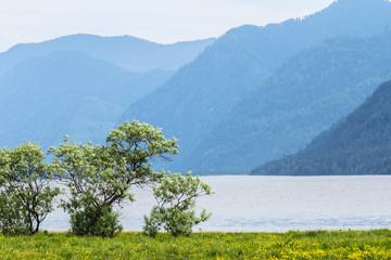 The clean fresh lake Teletsky among Mountains Altai.