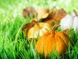 Pumpkins on green natural grass