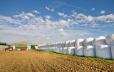 Row of ensilage in white plastic rolls