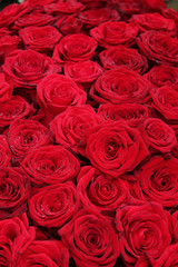 Big group of red roses