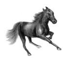 horse sketch - 58231669