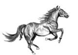 horse sketch - 58231678
