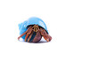 Little Hermit Crab in Blue Shell - 58231806