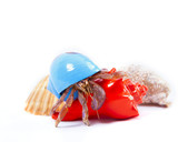 Hermit Crab in Blue Shell