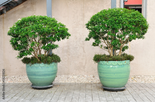 Double plant-pots put on cement floor.