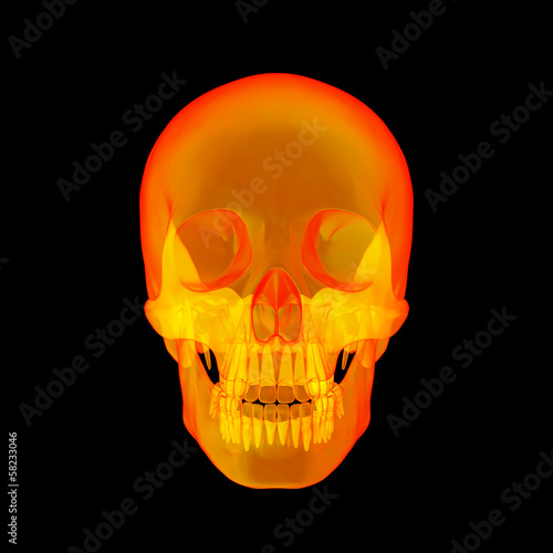Isolated human x ray skull on black background - front view