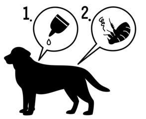 犬のノミ退治