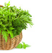 Collection of Fresh Spicy Herbs in Basket / isolated / Vertical