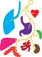 simple Nervous system human organs