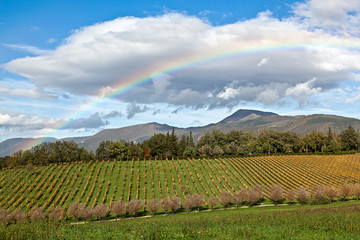Paesaggio con vigneto in autunno ed arcobaleno