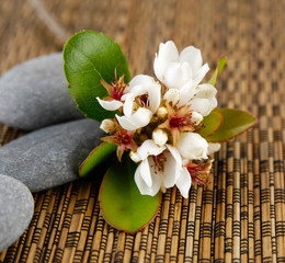 grey stones and spring flower on mat