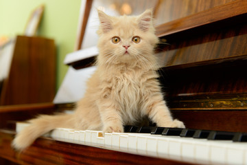 cat and piano