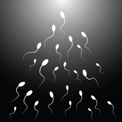 Vector illustration of spermatozoon