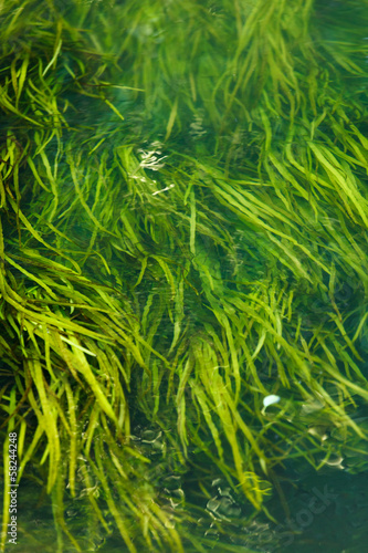 Algae in the river