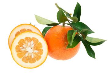 Daidai, Asian variety of bitter orange