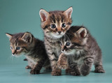 group of cute little kittens