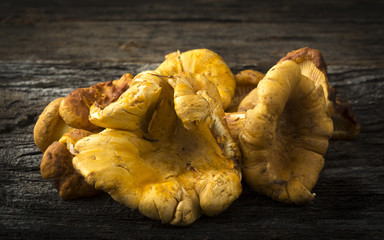 Chanterelle Mushrooms  on Rustic Wood