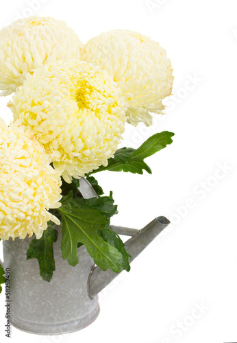 bouquet of yellow mums in watering can