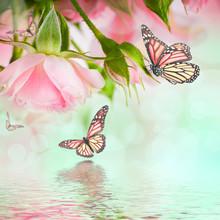 Belles roses et papillon, fleur, fond floral
